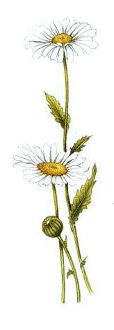 Operagastro > Ricette coi fiori: Insalata di primavera.