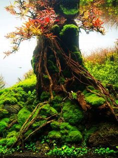 """simonsaquascapeblog: """"Details by Hai Xue Great hardscape work and plant/moss selection """" majestic!"""