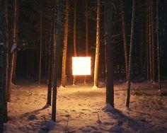cube in forest에 대한 이미지 검색결과