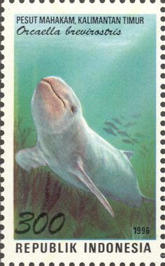 Topical Stamps Sharks Haie Animals Marine Fauna Guinea-bissau Mnh Stamp Set Modern Techniques Stamps