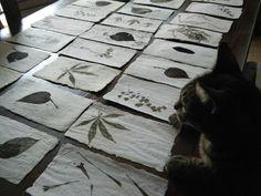 Papel reciclado y hojas....