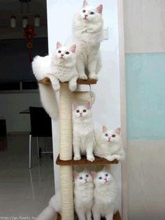 Cat perch!