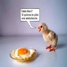 Funny Chicken Pictures Pics of Chicks) Funny Animal Photos, Funny Photos, Funny Animals, Cute Animals, Funniest Animals, Funniest Pictures, Animal Jokes, Funny Chicken Pictures, Que Horror