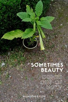 Sometimes beauty comes out of ugly | Momfever