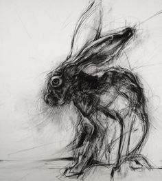 APRIL COPPINI // I love this hare, so many directional lines. It seems that the hare is being aware in multiple directions, ready to move in any of those directions. Jack Rabbit, Rabbit Art, Charcoal Art, Charcoal Drawing, Animal Drawings, Art Drawings, Lapin Art, Creation Art, Art Sculpture