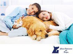https://flic.kr/p/RujXAq   Mantén a tu mascota y su área aseada. CLÍNICA VETERINARIA DEL BOSQUE 2   Mantén a tu mascota y su área aseada. LA MEJOR CLÍNICA VETERINARIA DE MÉXICO. Para que tu mascota esté siempre limpia al  igual que sus cosas, crea un horario frecuente de limpieza, al menos una vez cada 2 o 3 semanas y apégate a ese horario para limpiar a tu mascota y su espacio, para prevenir enfermedades y malos olores. En Clínica Veterinaria del Bosque contamos con servicio de…