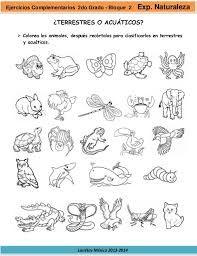 Resultado De Imagen Para Imagenes De Animales Marinos Alimentandose