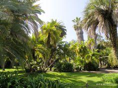 2013 Huntington gardens