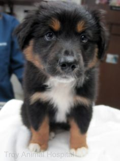 It's time for our midweek puppy pick-me-up and we are starting your morning off with a cute little pup named Lyric.