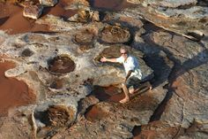 View perfectly preserved dinosaur tracks at low tide in rock on the beach along the Broome coastline in Western Australia which once was an ancient forest floor. Marvel at the brightly coloured birds that bask amongst the Mangrove trees lining the coast and be amazed by the history that hides on our ocean floor.