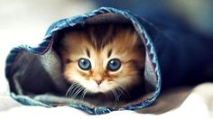 Cat hiding in sleeve, what could be more adorable.. XD