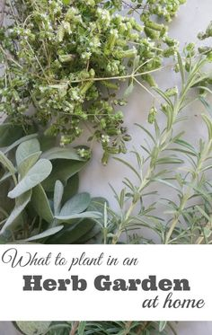 What to Plant in an Herb Garden at Home - So, you want to grow your own food at home, but you aren't sure where to start? Start with herbs. Super simple to grow and great to grow with kids. We've put together a list of the best herbs to grow at home and how to grow them successfully. | Garden with Kids | Herb Garden | Garden Life |
