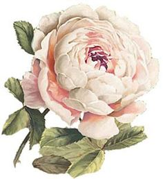 GoRGeouS-PaLe-PinK-CaBbaGe-RoSeS-SHaBbY-DeCALs
