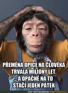 Funny Texts, Funny Jokes, Chuck Norris, Motto, Awkward, Memes, Favorite Quotes, Einstein, Haha