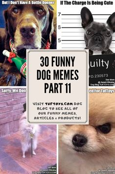 Have A Look At Comical New Pics Of Delightful Dogs Such As Dachshunds German Shepherds & Goldadors & Find Out What They're Really Thinking With Our Hi-Tech Brain Reading Device Only Dog Jokes, Funny Dog Memes, Cat Memes, Funny Dogs, Funny Animals, Dog Humour, Hilarious Jokes, Cute Dog Photos, Funny Dog Pictures