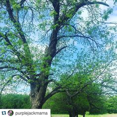 #Repost @purplejackmama with @repostapp.  Sunny and 65! #heardmuseum_mckinney #heardmuseummckinney #heardmuseum #heardtexas #naturelovers #nature #texasnature #texas #texasnaturephotos