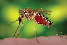 What is Dengue fever? Precautions and Treatment Dengue fever is a contagious disease caused by a specific type of mosquito bite. The fe.