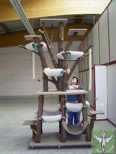 Kratzbaum und Katzenbaum von Katzentraum - Produkte - Katzenbäume - Traumbäume