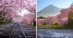 I photographed Japanese spring scenery. It is a season of cherry blossoming. I was surprised to see this great view.