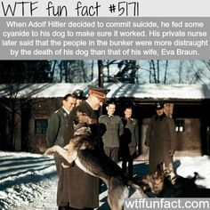 Adolf Hitler's dog, Blondi - WTF fun facts
