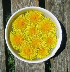 What to do with dandelions? Yes, they are an extremely nutritious free delicious food, learn what to do with them instead of poisoning them and the environment.