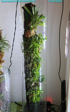 Click any image below to see gallery images displayed in a full-size carousel view and to comment on each photo. Introduction It is always amazing to look at all the superb orchid vivariums, terrar. Orchid Plants, Air Plants, Indoor Plants, Orchid Terrarium, Terrarium Plants, Planted Aquarium, Ikebana, Musgo Sphagnum, Mini Orquideas
