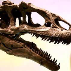 Dinosaurs At the Denver Museum of Nature and Science