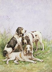 Animals Paintings - A Group of French Hounds  by Charles Oliver de Penne