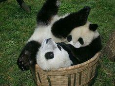 Haha..we'll fit!