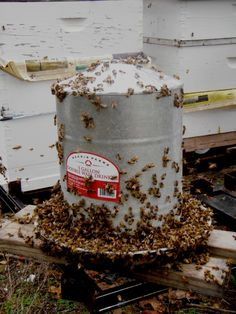 Feeding bees sugar syrup