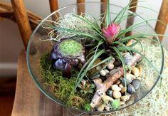 Terrarium Aeonium Bromiliad Sedum In A Glass Bowl