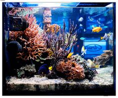 Online Course: How to take pictures of your reef tank