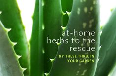 3 at-home herbs to your rescue