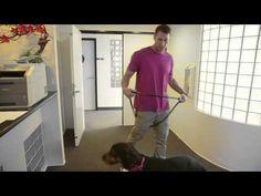 Lucky Dog- Office Savvy - YouTube