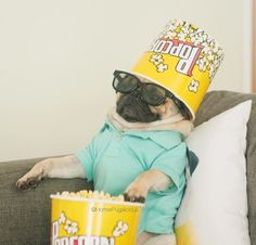 """pugs: """" what's up """""""