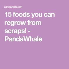 15 foods you can regrow from scraps! - PandaWhale