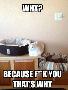 haha my cats do this all the time!