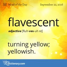 Today's Word of the Day is flavescent. Learn its definition, pronunciation, etymology and more. Join over 19 million fans who boost their vocabulary every day.