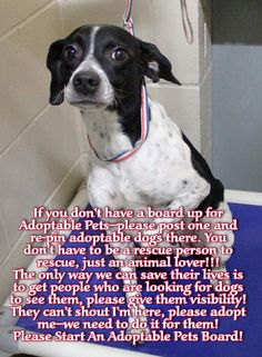 If you don't have a board up for Adoptable Pets--please post one and re-pin adoptable dogs there. You don't have to be a rescue person to rescue, just an animal lover!!! The only way we can save their lives is to get people who are looking for dogs to see them, please give them visibility! They can't shout I'm here, please adopt me--we need to do it for them! Please Start An Adoptable Pets Board!