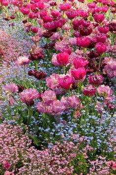 So beautiful flowers