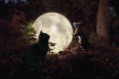 Contestbild Als der Mond in den Garten fiel - PSD-Tutorials.de