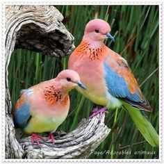 I like the beautiful colors of these pigeons