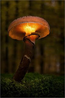 Lantern on the forest floor
