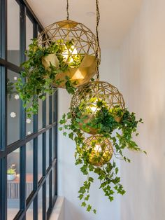 Show home in Hampsetad, London Terrarium light fittings, hanging plants, brass light fitting MOUNT-ANVIL-SUMRAY-R… House Plants Decor, Plant Decor, Easy Home Decor, Cheap Home Decor, Deco Jungle, Plant Lighting, Image House, Indoor Plants, Hanging Air Plants