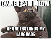 Unbelievable Funny Pictures Of Today's Internet - 26 Pics Funny Texts, Funny Jokes, Unbelievable Funny Pictures, Funny Dragon, Cat Behavior, Cat Supplies, Cat Life, Cat Memes, Make You Smile