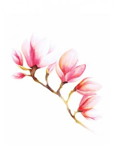 Title: Magnolia Size: cm inch) This is a print of my original watercolor painting. Signed on the back and packaged and shipped Watercolor Flowers, Watercolor Paintings, Watercolors, Botanical Illustration, Illustration Art, Aquarell Tattoos, Magnolia Flower, Magnolia Branch, Painting Inspiration