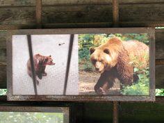 Unser Tipp besonders für Familien und Ruhe- und Naturliebhaber: Besucht den Bärenwald Müritz! Es gibt viel zu lernen, sehen und verstehen. Außerdem ist die Umgebung wunderschön, z.B. für Fahrradtouren oder zum Schwimmen in den unzähligen Seen.  Veganes Essen findet man im Bistro des Bärenwaldes (in der Umgebung eher weniger).  #vegan #bärenwald #müritz #freizeit #veggie-friendly #v-like