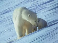 Mother & babies