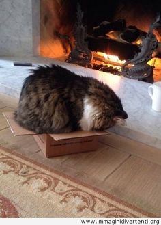 Certo che si adatta - gatto divertente con una scatola immaginidivertenti.org