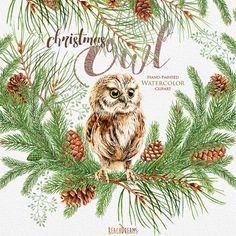 Christmas Watercolor Owl, Happy holidays, green spruce, briar, cones, bird. Christmas decorations, Merry And Bright diy, greeting, PNG files